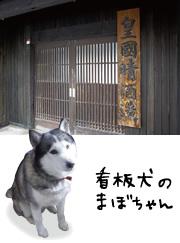 皇国晴酒造の看板犬、まぼちゃん