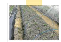 安心野菜を作るため、肥料も自分で作ります。