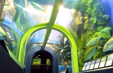富山県の魚津水族館