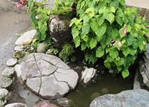 お庭の亀石