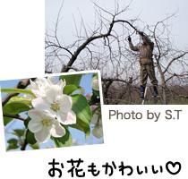 りんごの木とりんごのお花