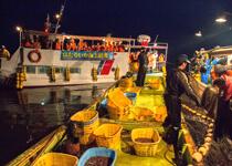 観光船とほたるいか漁船。漁が始まるのを今か今かと待つところ