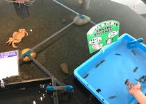 ホタルイカやズワイガニを触れるタッチプール