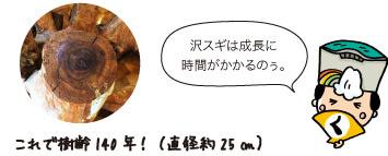 樹齢140年の沢スギの太さ。殿:沢スギは成長に時間がかかるのぅ。
