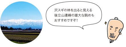じぃ:沢スギの林を出ると見える後立山連峰の雄大な眺めもおすすめですぞ!