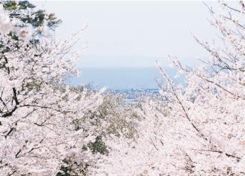 桜井城から見る桜