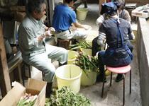 黒薙温泉旅館でスタッフさんが山菜の仕込みを行う様子